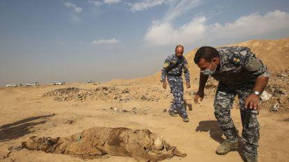 Meer dan 200 massagraven en duizend lichamen ontdekt in Irak: resultaat van meedogenloze geweld van IS