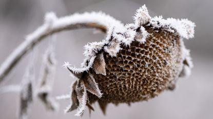 Pittige buien trekken vandaag over ons land met korrelhagel, onweer en sneeuw in de Ardennen