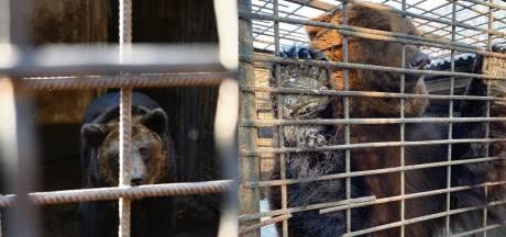 Ouwehands Dierenpark heeft nog 9000 euro nodig om verwaarloosde beren uit Oekraïne te redden