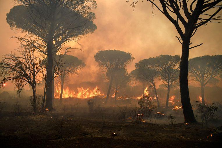 Het vuur slaat om zich heen in de bossen bij Gonfaron, in het zuiden van Frankrijk.  Beeld AFP