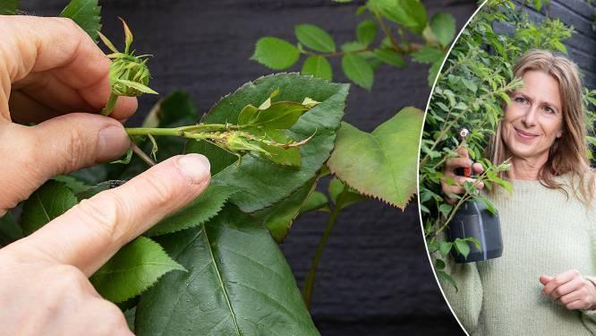 Geef beestjes geen kans: onze tuinexperte toont hoe je natuurlijke anti-insectensprays en plantenvoeding maakt