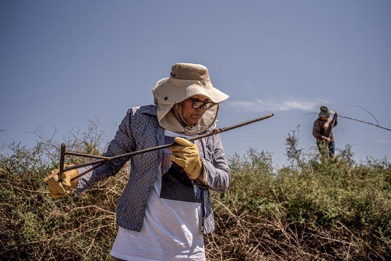 Soledad Pérez Leon kijkt naar en ruikt aan de ijzeren prikker voor sporen. Op een dag hoopt ze haar zoon Miguel Angel te vinden. Beeld Alejandro Cegarra