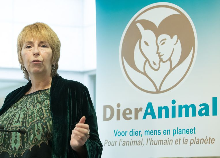 Animal Politics Foundation-lid Elze Boshart, die zelf geen lid is van DierAnimal, tijdens de persconferentie van de partij DierAnimal. Beeld BELGA