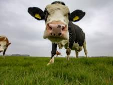 HAS Hogeschool werkt mee aan onderzoek dat overgang naar duurzame landbouw en veeteelt moet versnellen