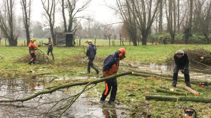 Knotters zoeken knotbomen voor project Goed Geknot