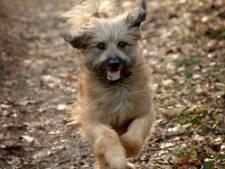 Dedemsvaartse honden en hun baasjes krijgen er twee losloopveldjes bij
