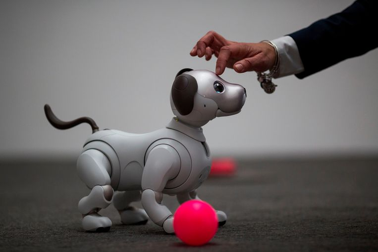 TOPSHOT - The newest generation of the Aibo robot, which uses artificial intelligences, is demonstrated on the eve of CES in Las Vegas, Nevada, January 8, 2018.   / AFP PHOTO / DAVID MCNEW Beeld AFP