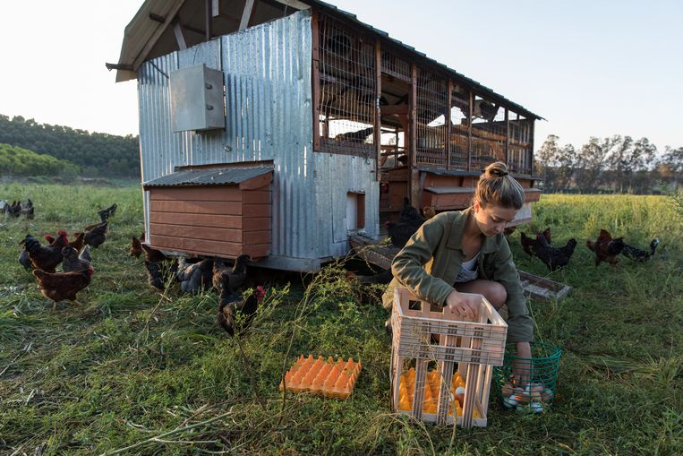 Beeld uit 'The Biggest Little Farm'. Beeld Cinemien