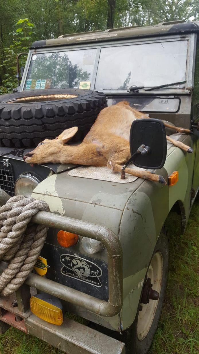 De dode ree op de motorkap van de Landrover. De bestuurder trof het dier aan, dat eerder die nacht was aangereden door een auto.