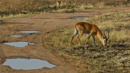 Gewapende mannen ontvoeren toeriste en chauffeur in Oegandees nationaal park en eisen losgeld