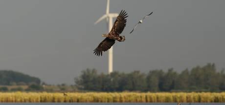 Natuurclubs starten petitie tegen wind- en zonneparken op de Noord Veluwe