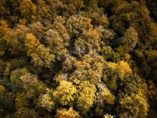 400 hectare natuur in Gelderland wisselt van eigenaar