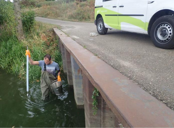 Een medewerker van het waterschap neemt een monster van water met blauwalgen.