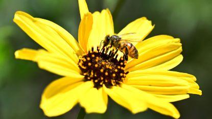 Pornosite lanceert kanaal om bijen te redden