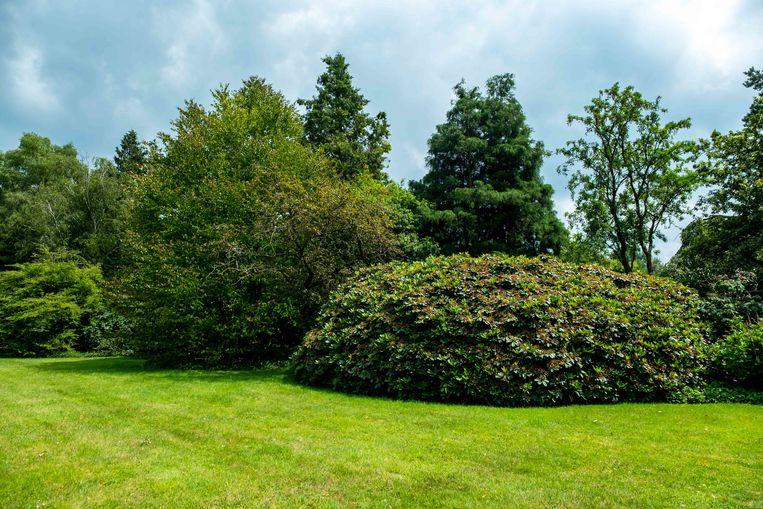 Het Arboretum Kalmthout breidt uit met ruim één hectare.