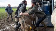 16 achtergelaten paarden van terrein vlak aan E411 gehaald
