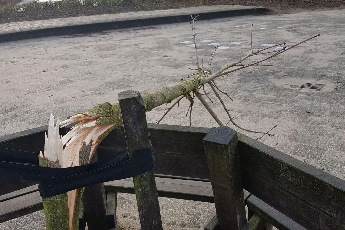 De vernielde boom