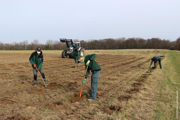 Groenarbeiders van ANB plantten de bomen aan.