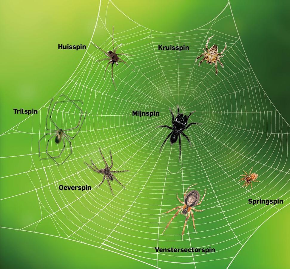 De zeven grootste spinnen die je op weg naar je werk tegenkomt.