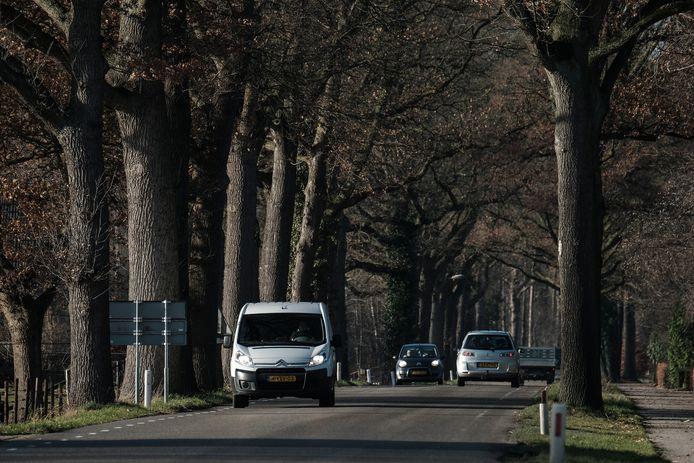 De eiken langs de Corlseweg gaan verdwijnen. De bomen zijn volgens de gemeente doodziek en worden vervangen.