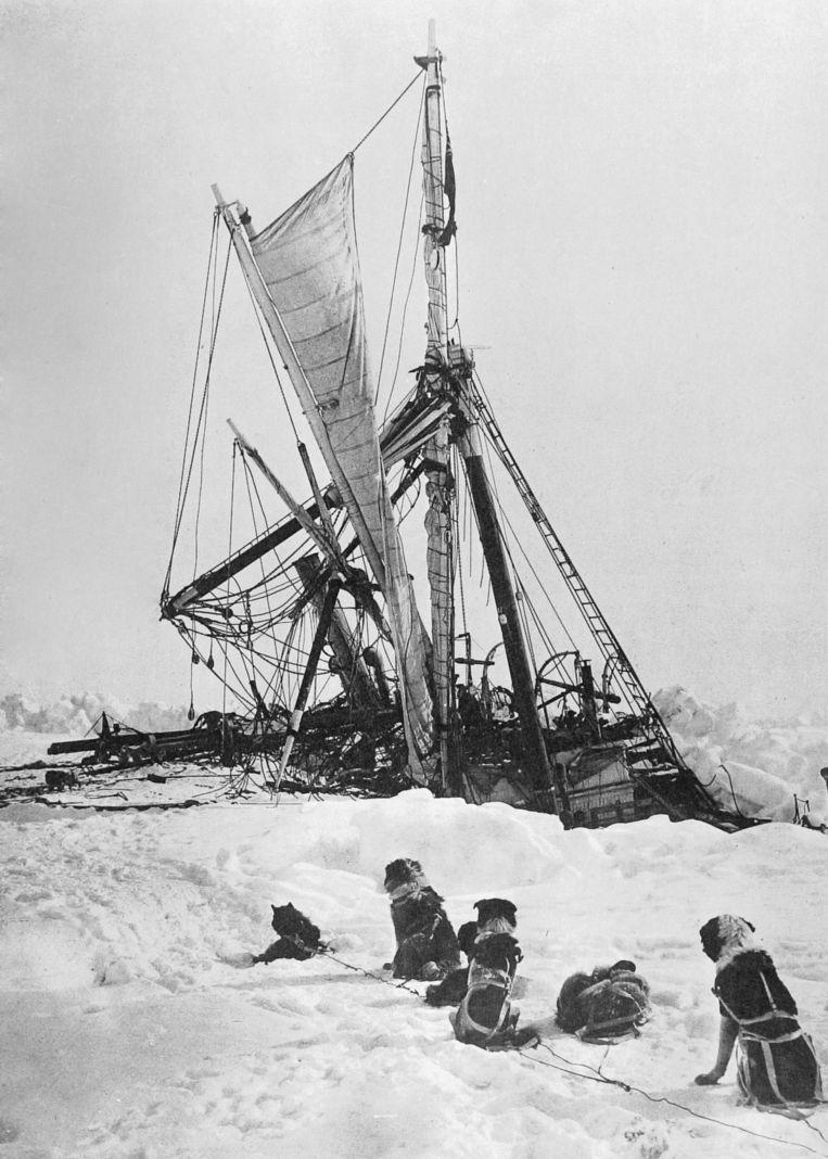 Honden kijken toe hoe de HMS Endurance langzaam wegzakt in het ijs in 1915. Beeld Photo12/UIG/Getty Images