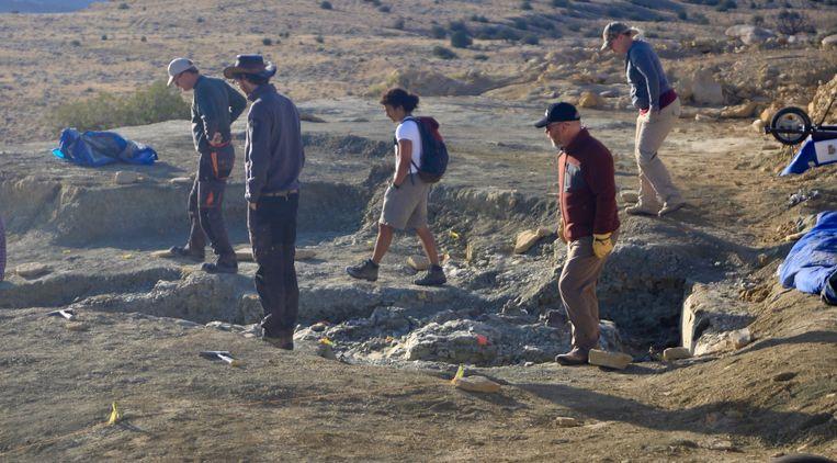 Opgraving op de Jurassic Mile Beeld Naturalis
