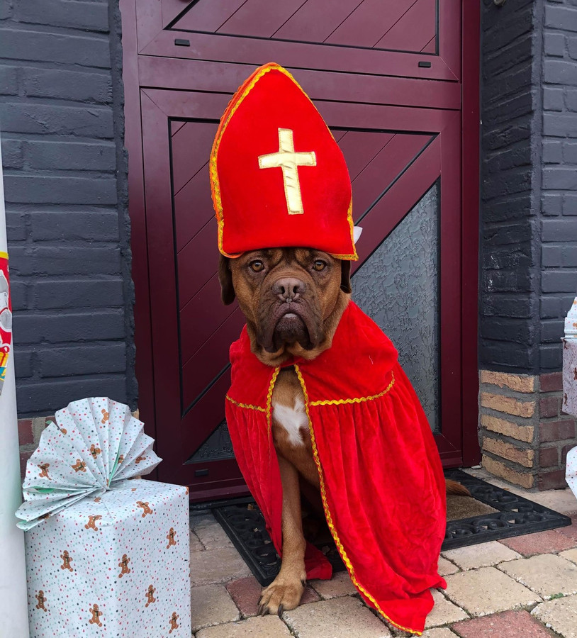 Cindy Heuten uit Putte (Woensdrecht) vlakbij de grens met Putte-Kapellen en Putte-Stabroek heeft haar hond Isa verkleed als Sinterklaas