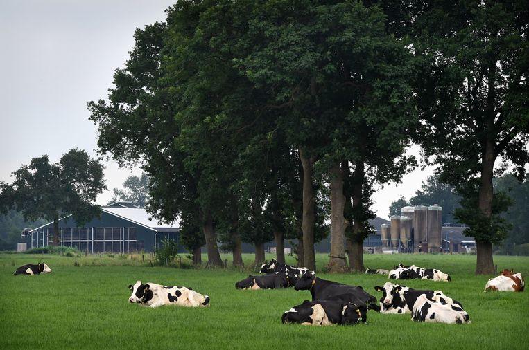 Volgens het Planbureau voor de Leefomgeving is effectief klimaat- en natuurbeleid in dit kleine, volle land níet verenigbaar met grootschalige intensieve landbouw. Punt uit. Beeld Marcel van den Bergh