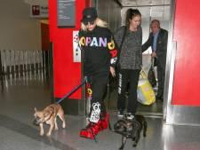 Bendeleden opgepakt voor ontvoering honden Lady Gaga