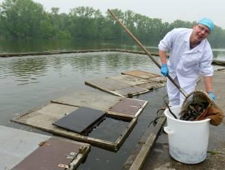 Paling verdwijnt na meer dan halve eeuw uit Donkmeer: palinghandelaar Borremans verhuist kwekerij naar Puurs-Sint-Amands