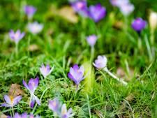 De Zeeuwse lente start droog met geregeld zon