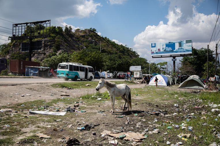 Zo leven de migranten, in provisorische tenten langs de kant van de weg. Een paard graast op een stortplaats. Het billboard prijst luxe zonwering aan: 'Een elegante verandering.' Beeld Tomás Ayuso