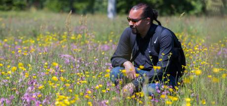 Sallandse Vlinderfotograaf telt steeds meer soorten: 'Icarusblauwtje niet verwarren met bruinblauwtje'