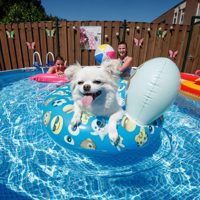 Een enorm zwembad in een kleine tuin. De zussen Lydia en Lisette Wolters vinden er hun verkoeling samen met de hond.