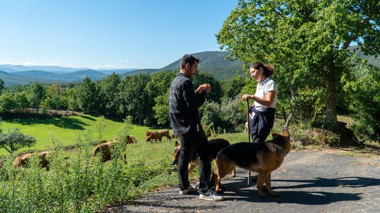 Aida Fernandes praat in de heuvels van Covas do Barroso met activist en wetenschapper Francisco Venes. Op de achtergrond de koeien van Fernandes. Beeld Sarah Haaij