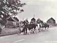 Website Historische Vereniging Hasselt weer in de lucht