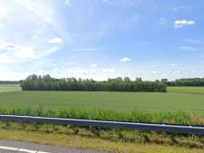 Illegaal gekapte bomen Oranjepolder moeten terugkomen: 'Dat is geen enkel punt'