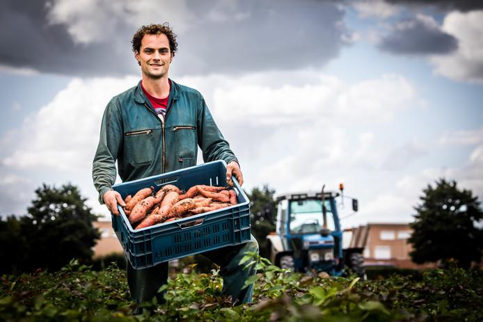 Volgens Niels van der Waal was het 'geen gok' om het substropische gewas in de Hoeksche Waardse grond te planten.