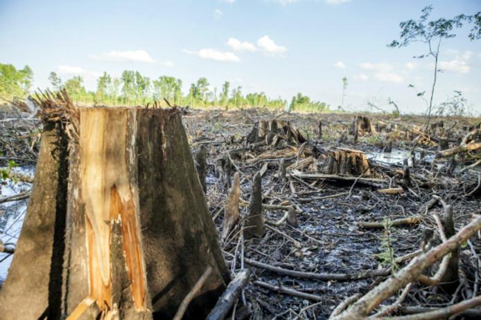 Volgens natuurorganisaties worden ook hele bomen gebruikt voor de productie van houtpellets.