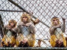 Aantal gebruikte apen voor proeven in testcentrum in Rijswijk neemt af