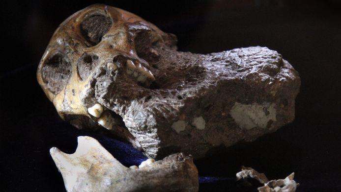 Archiefbeeld van menselijke resten die Lee Berger van de universiteit van Witwatersrand eerder opgroef in Zuid-Afrika.
