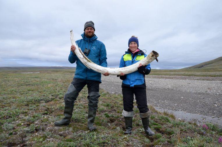 Onderzoekers Love Dalén and Patrícia Pečnerová met een mammoetslagtand op het Russische eiland Wrangel. Beeld Gleb Danilov