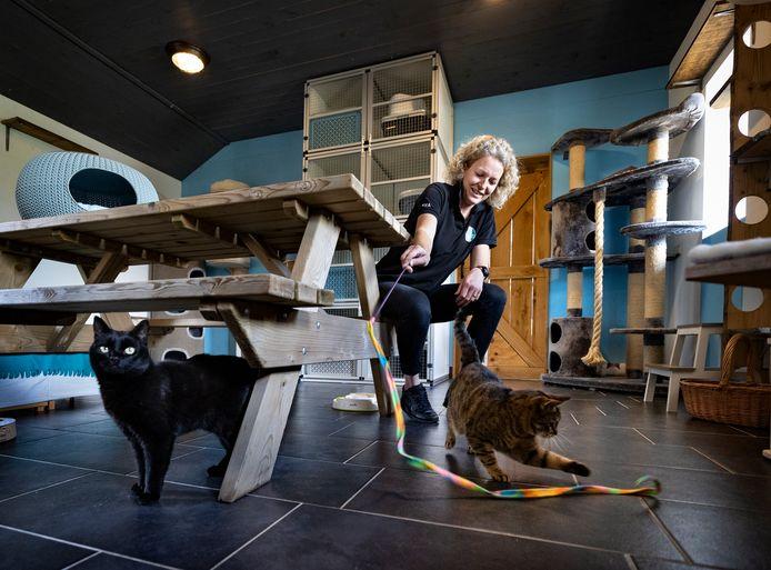 Eva D'Hoe in haar Kattenhotel Catz in Deurne, te midden van enkele 'gasten'.