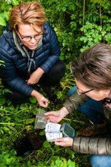 Als een schatzoeker op jacht naar geocaches in de polder: 'Je moet het leren, net als elke andere hobby'