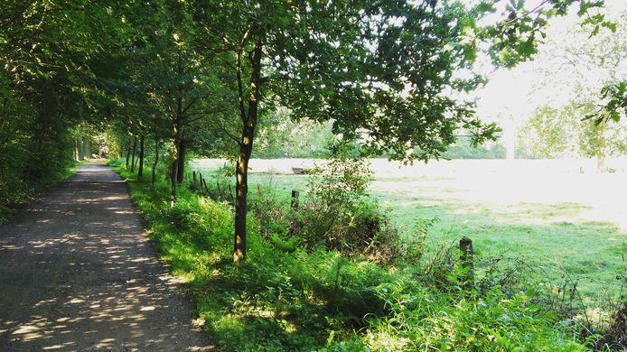 Een trage weg is een pad of weg die bestemd is voor niet-gemotoriseerd verkeer.