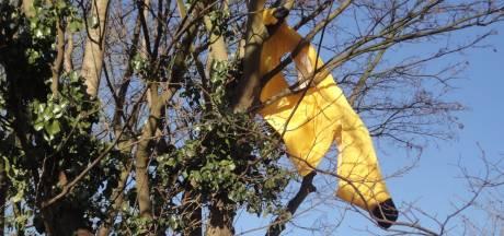 In bananenpak naar Oeteldonk reizen en 'Alaaf' schreeuwen in Bossche oren