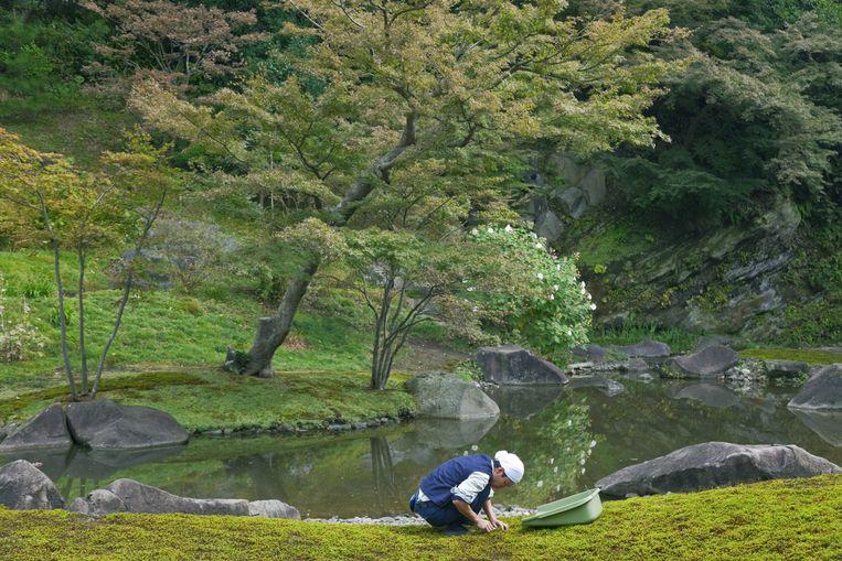 'De extreem geconstrueerde esthetische tuinen van de zenkloosters in Japan.' Beeld null