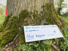 Broedende vogels redden zieke boom in Kampen: 'Niet kappen aub!'