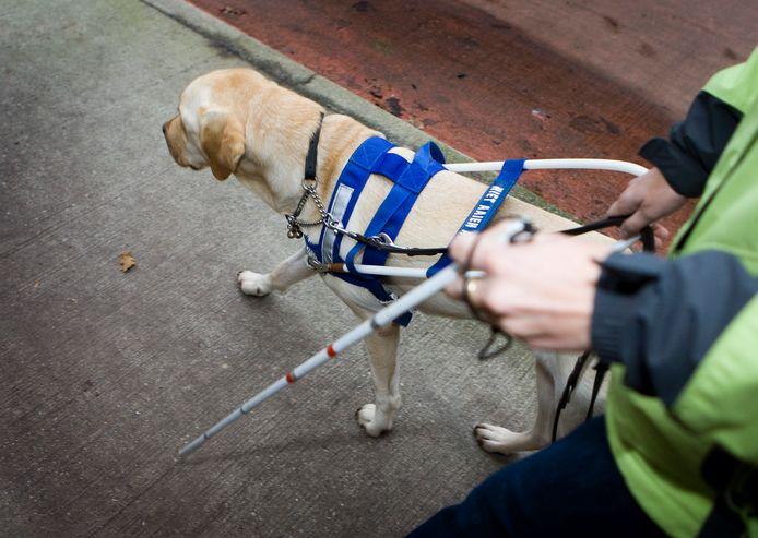 Hond om blinden en slechtzienden te begeleiden