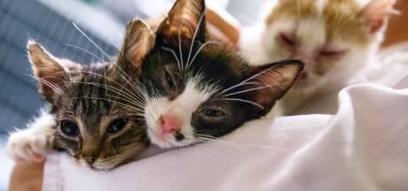 Onrust in Wilnis om dode katten door rattengif: 'Houd je poes voorlopig in huis'